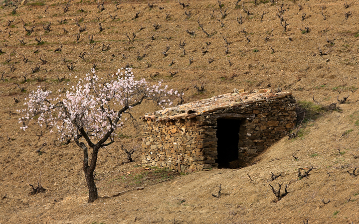 Terroir-al-Limit-Cal-Compte-Casa-Rural